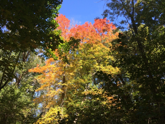 Hiking October 2014 031
